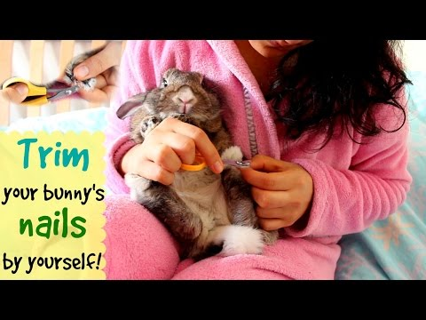 How to trim your bunny's nails by yourself
