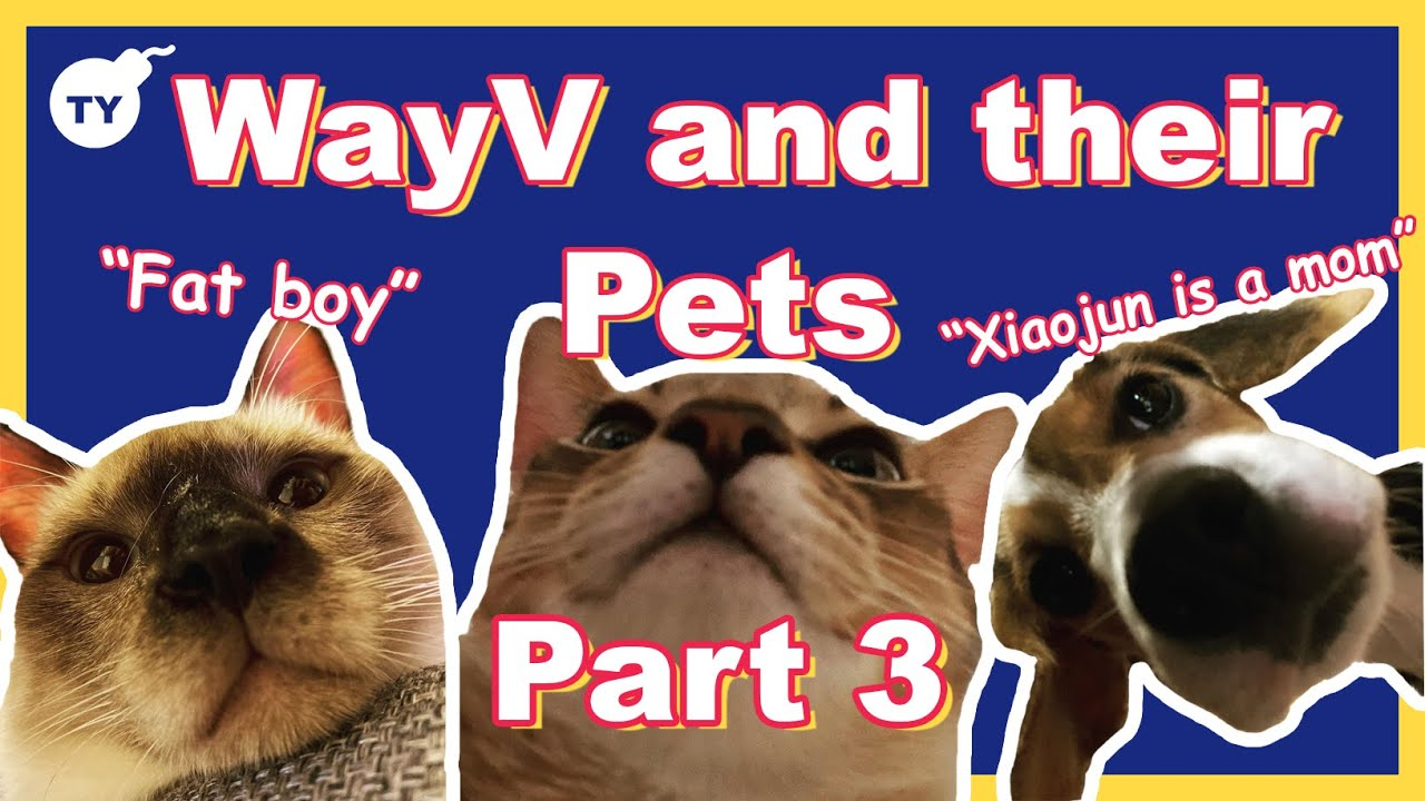 WayV and their pets being a mess | part 3