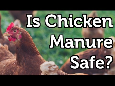 Is Chicken Manure Safe to use in the Garden?