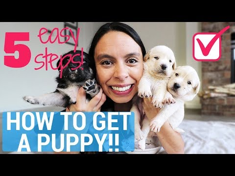 Get Your Parents to Say YES to a PUPPY, Guaranteed!! 5 Easy Steps