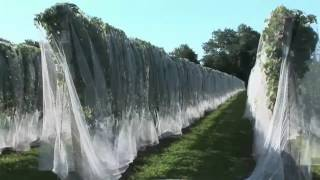 Amazing Agriculture Machines (Prt 2)