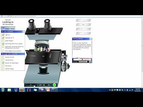 virtual microscope lab