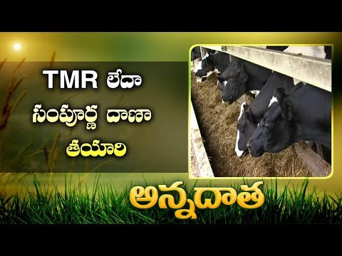 TMR Preparation   Total Mixed Ration   as Complete Meal For Cattle    EtvAnnadata