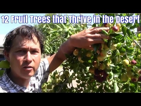 12 Fruit Trees that Thrive in the Desert with Little Care