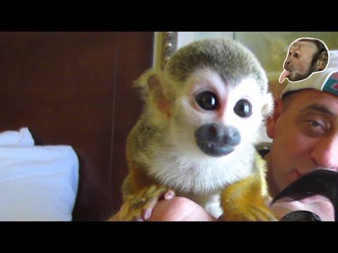 Baby Squirrel Monkey