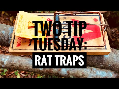 Two Tip Tuesday: Rat Traps