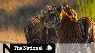 Download Nature documentaries inspire climate change activism Video