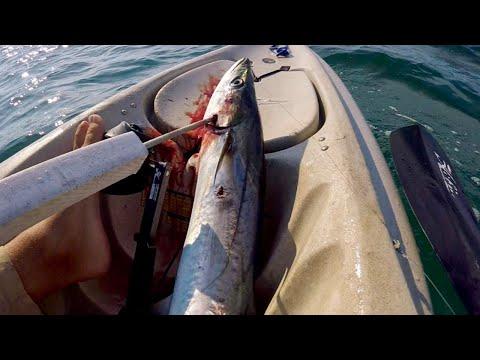 Catch and Cook- King Mackerel Patties! (Best Mackerel Recipe Ive Seen!)