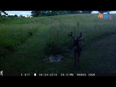 Big Buck making Little Deer Sounds!