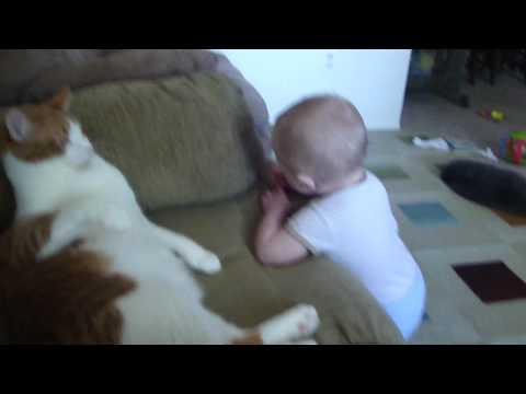 Cat Swatting at baby.....hilarious
