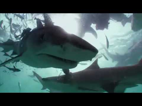 Stopping Shark Attacks | Shark Week