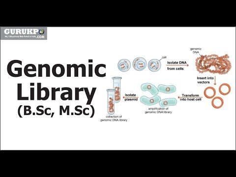 Gene Library   Genomic Library and cDNA Library(B.Sc, M.Sc)