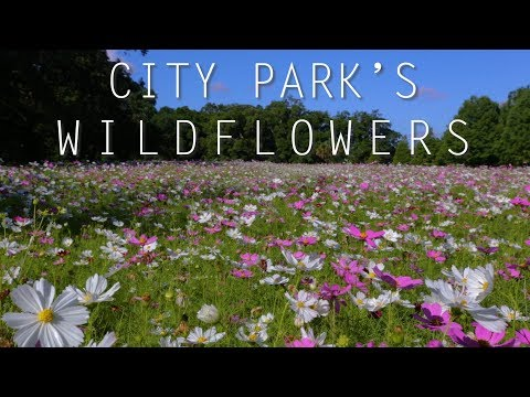 New Orleans City Park wildflower fields a delight to behold