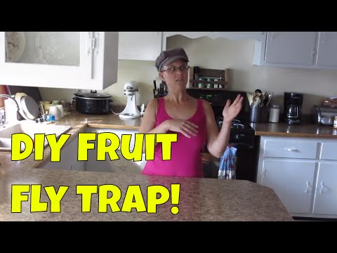 DIY Fruit Fly Trap that Actually Works!