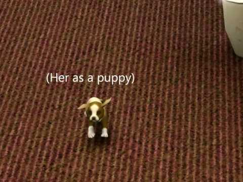 Sims 3 Pets Cute Dogs