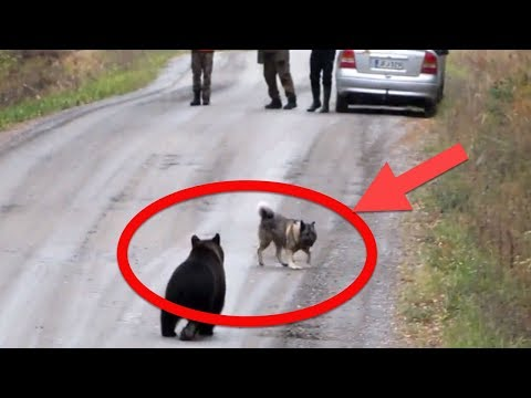 When This Dog Raced Out Of The Woods, His Owners Froze On Seeing The Ferocious Animal In Pursuit