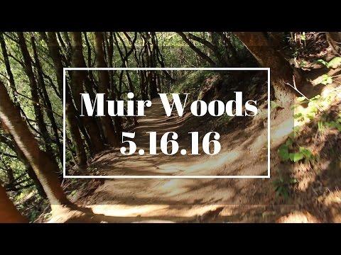 Muir Woods 5.16.16