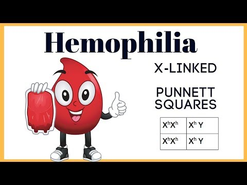 Why is hemophilia more common in males than females? (X- linked Punnett Squares)
