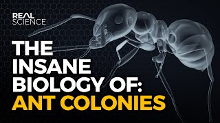 The Insane Biology of: Ant Colonies