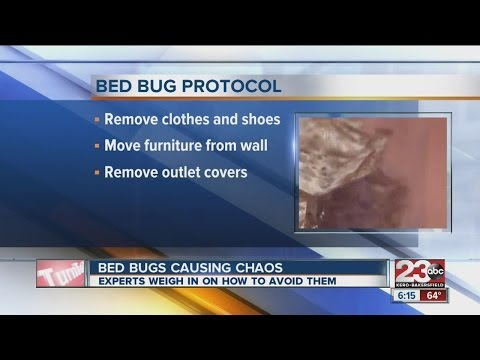 Bed bugs on the rise, experts weigh in on how to avoid them