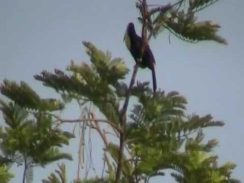 toucan and hummingbird near Palenque Guatemala