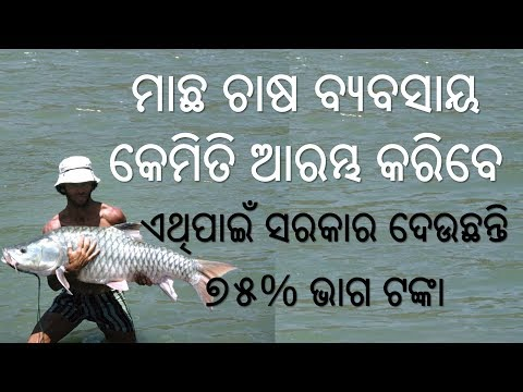Fish Farming in Odisha - Machha Chasha Byabasaya - How to start Fish Farming Business