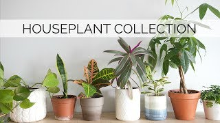 MY HOUSEPLANT COLLECTION   12 easy & low-maintenance plants
