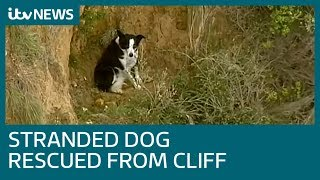 Stranded dog centre of rescue operation after getting stuck on cliff | ITV News