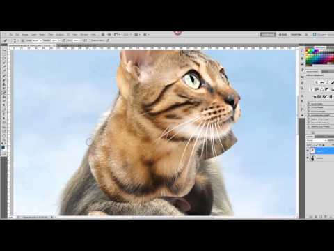 Hybrid Animal Photoshop Tutorial