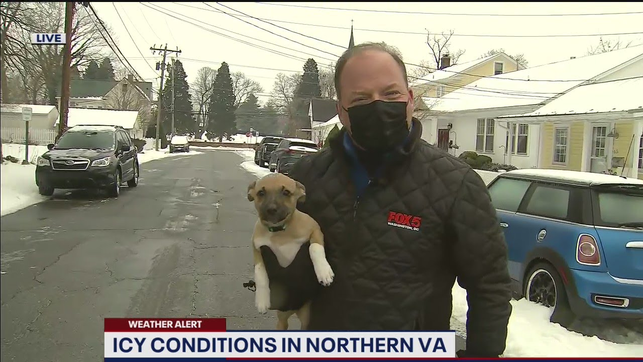 Adorable puppy crashes reporter's weather report on live TV! | FOX 5 DC