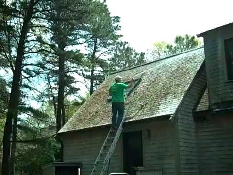 remove roof moss like a professional