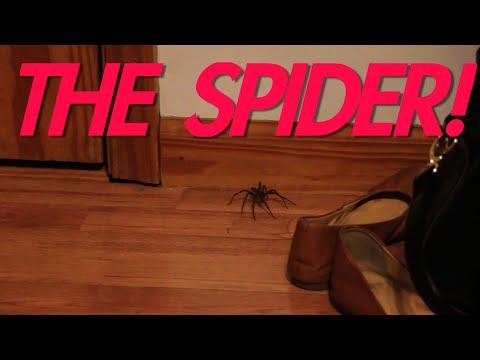 JESSE vs THE SPIDER!