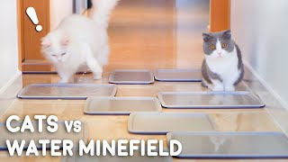 Cats vs Water Minefield Challenge