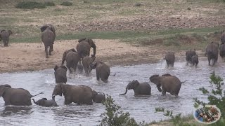 Elephants Of The Crocodile River