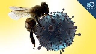Bee Venom Kills HIV