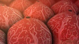 Hepatitis C   Nucleus Health