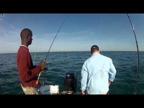 Hog Fish and Kings Double Header Live Bait Clearwater Beach