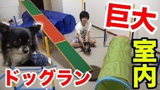 【巨大】室内ドッグランを設置してチワワに遊ばせたら可愛すぎた!!【チクワくん】