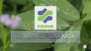 FAMA Ladang Kontrak 2016