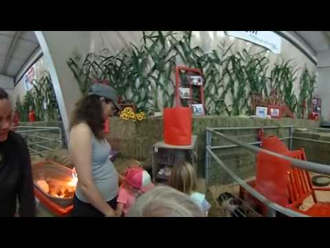 Kids Carnival Animals - VR Baby Chicks Hatching in Your Face!
