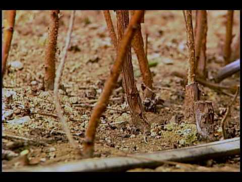 Raspberry Trims - Three Minute Gardener
