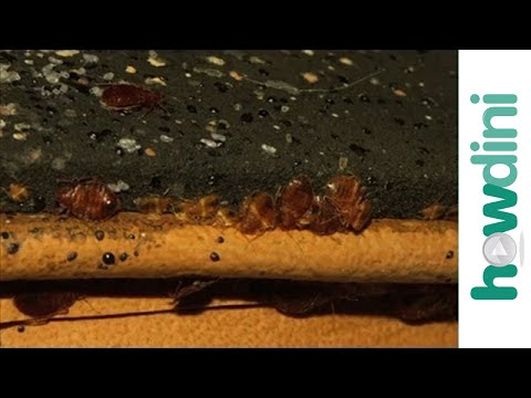 How To Get Rid Of Bed Bugs Prepping For A Bed Bugs Treatment