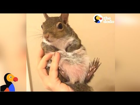 Squirrel Saved From Hurricane Is SPOILED by Her Mom | The Dodo