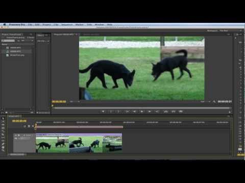 Premiere Pro - How to Freeze Frame/Frame Hold
