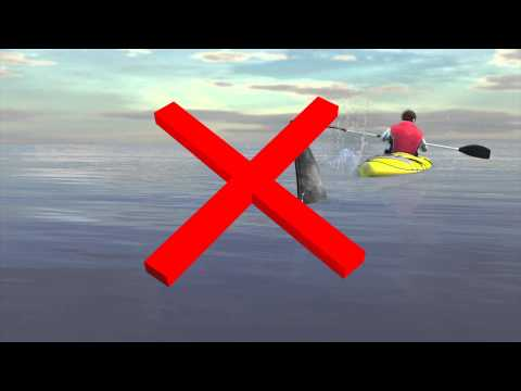 Kayakers: What to do if you spot a shark