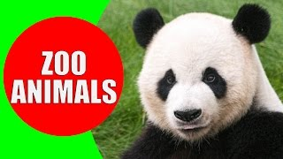 Zoo Animals for Kids - Videos and Sounds of Wild Animals at the Zoo for Children to Learn
