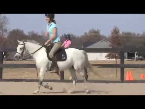 Small Hunter Pony For Sale - Penny Royal