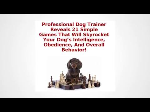 Brain training for dog reviews