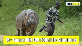 15+ Funny RUN FOR YOUR LIFE Situations - Try Not To Laugh