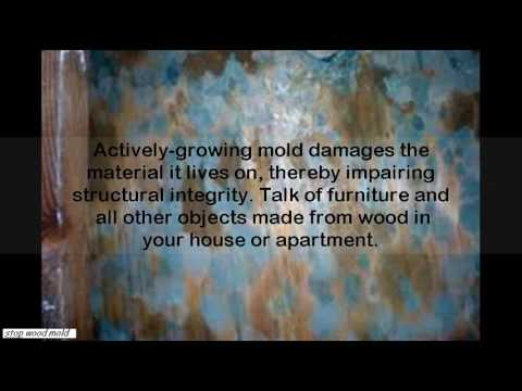 how to get mold off wood